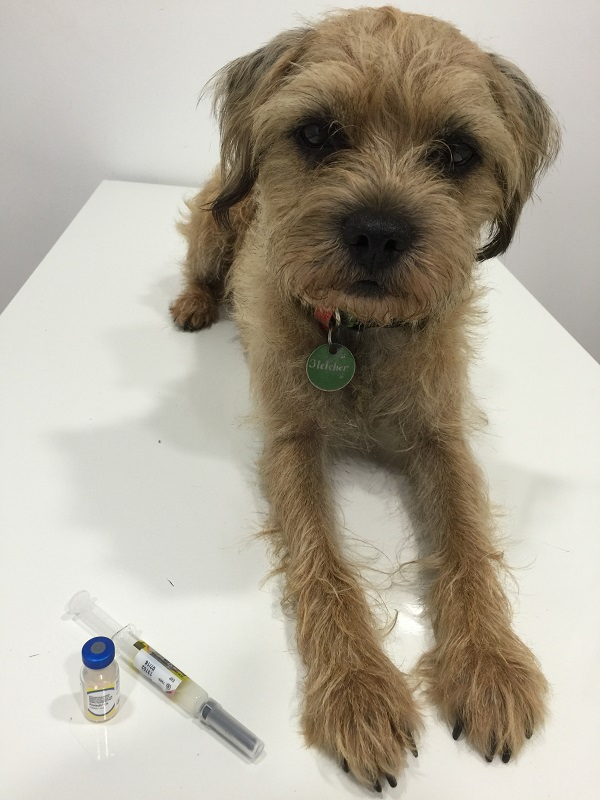 Ipswich-vaccinations